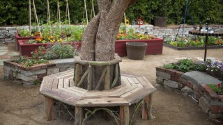 Simple design steps can take your garden to the next level