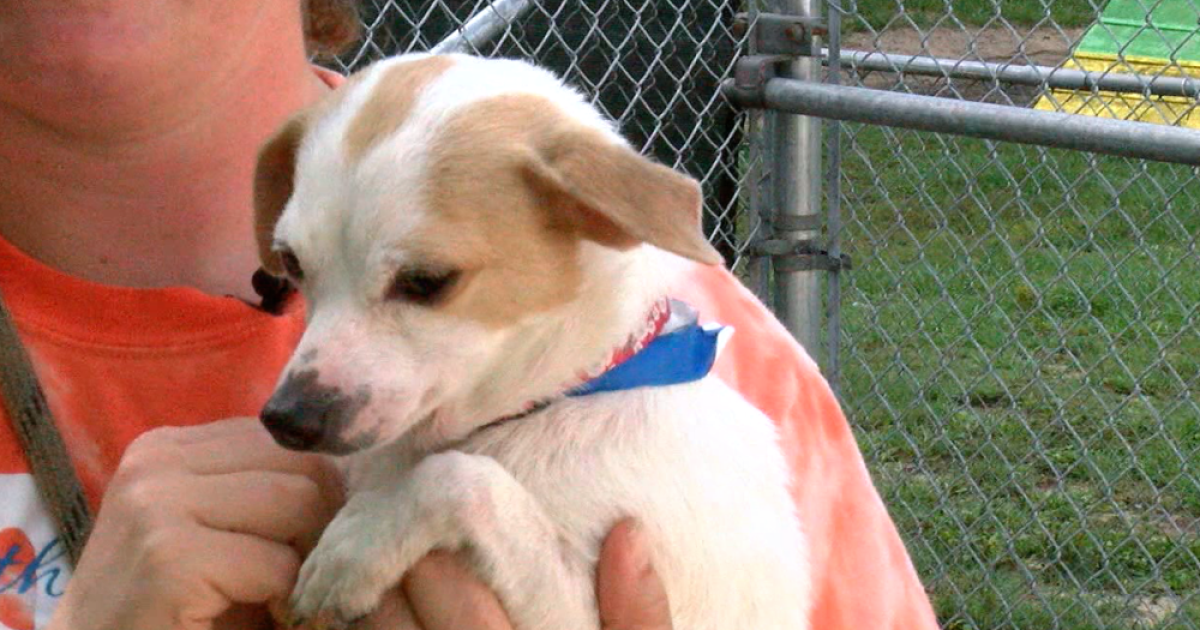 SPCA's Rent-A-Dog program expands in Florida  The free program