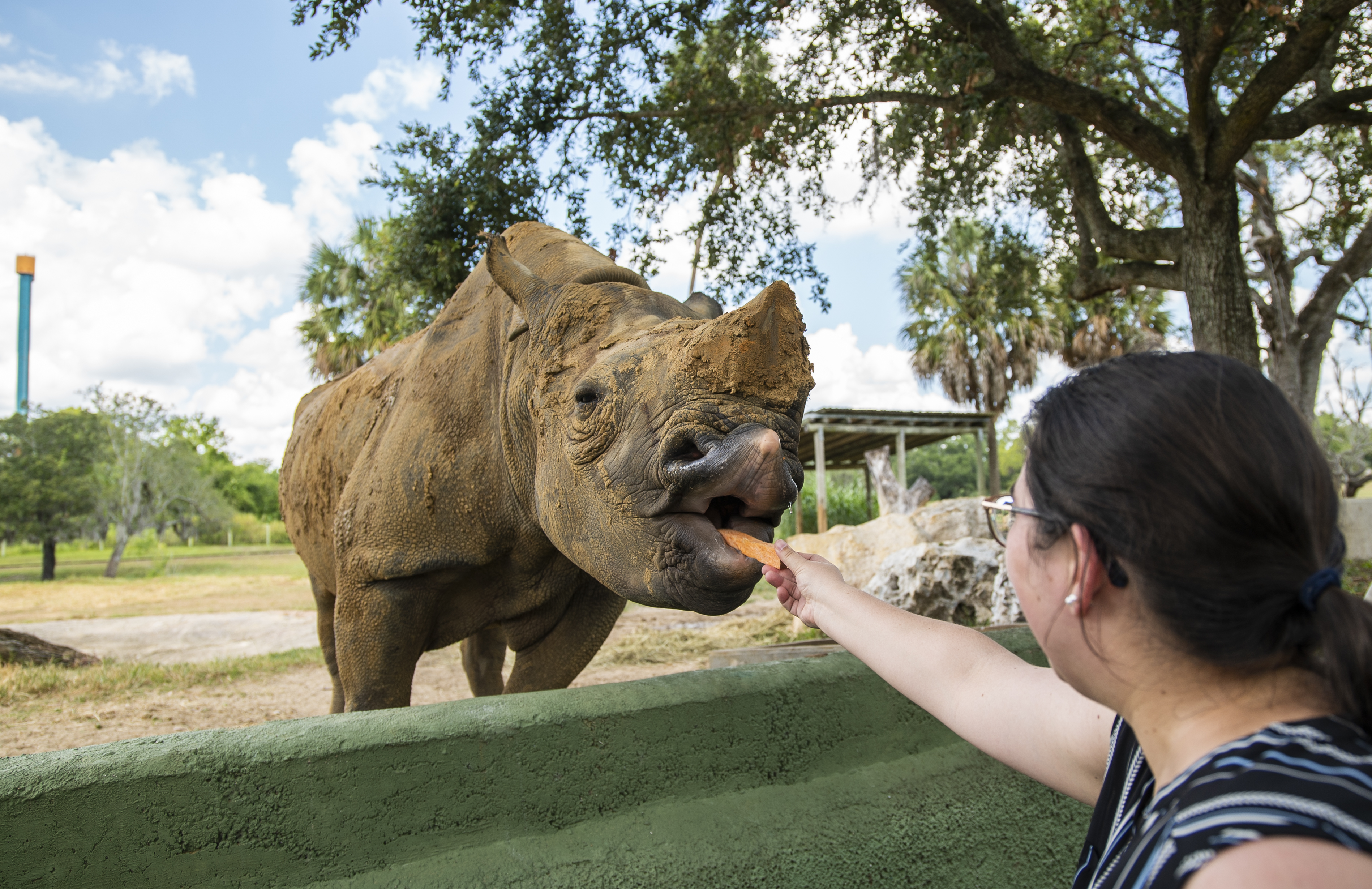 Get Up Close With Exotic Animals At Busch Gardens Tampa Bay