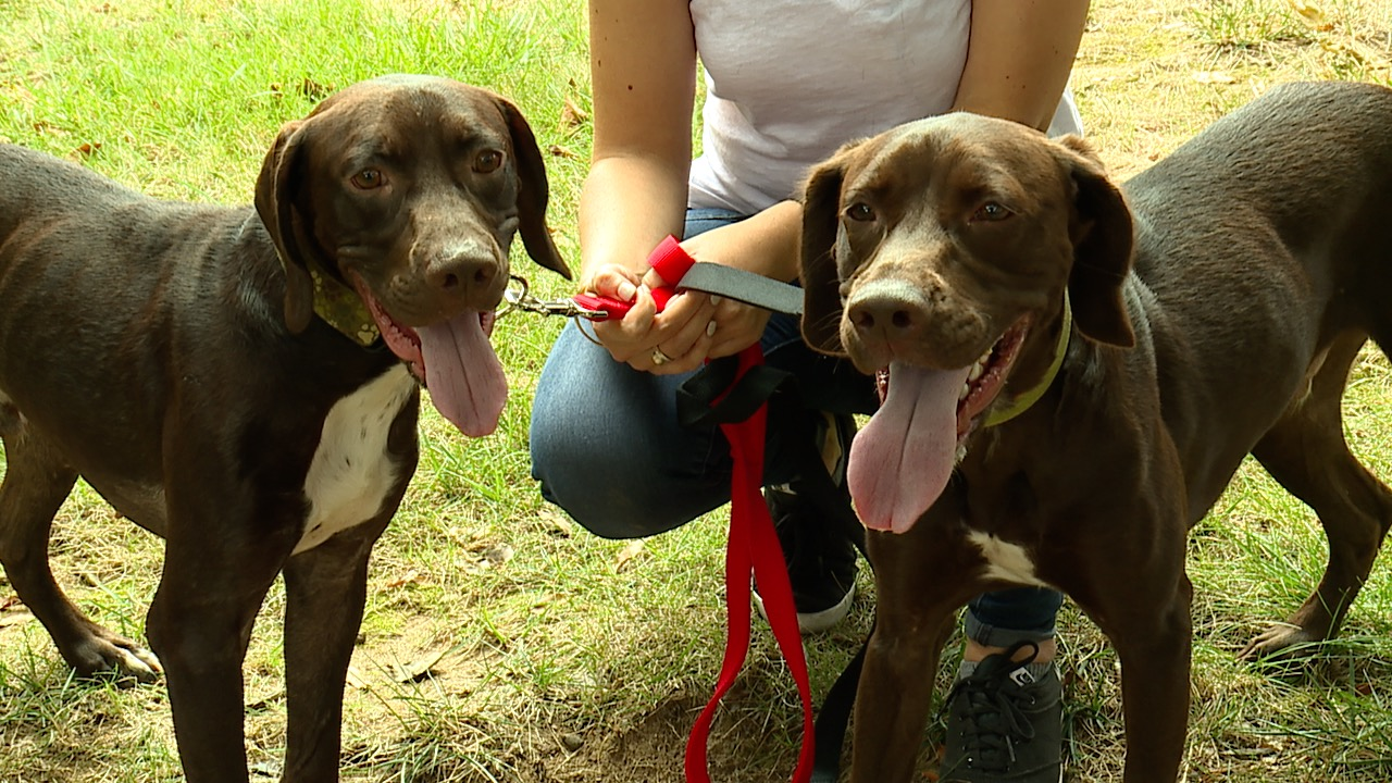 Separated at birth, dog brothers reunited after 1 5 years
