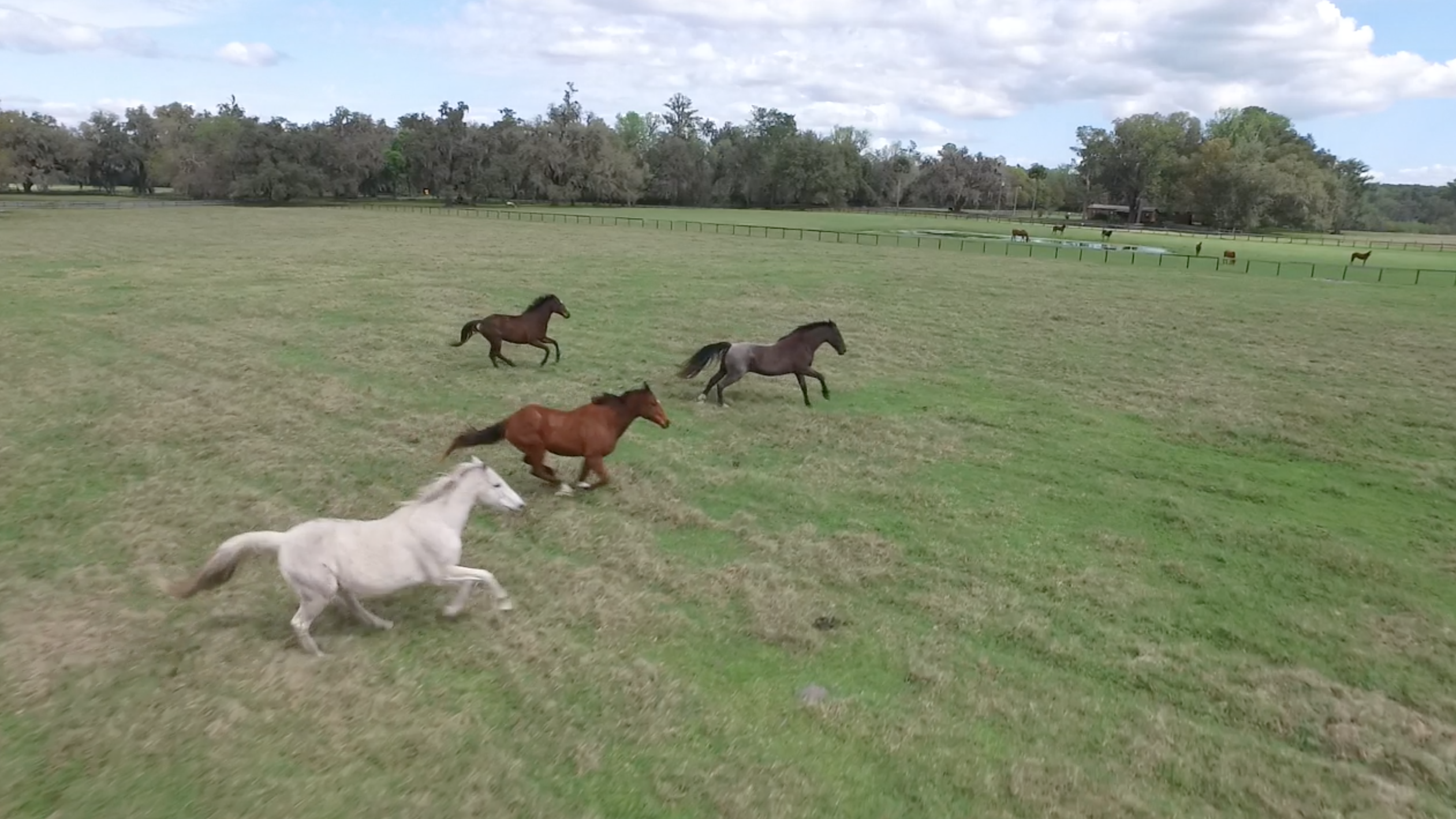 From Show Horse To Food Source Abandoned Florida Horses Sent To Slaughter