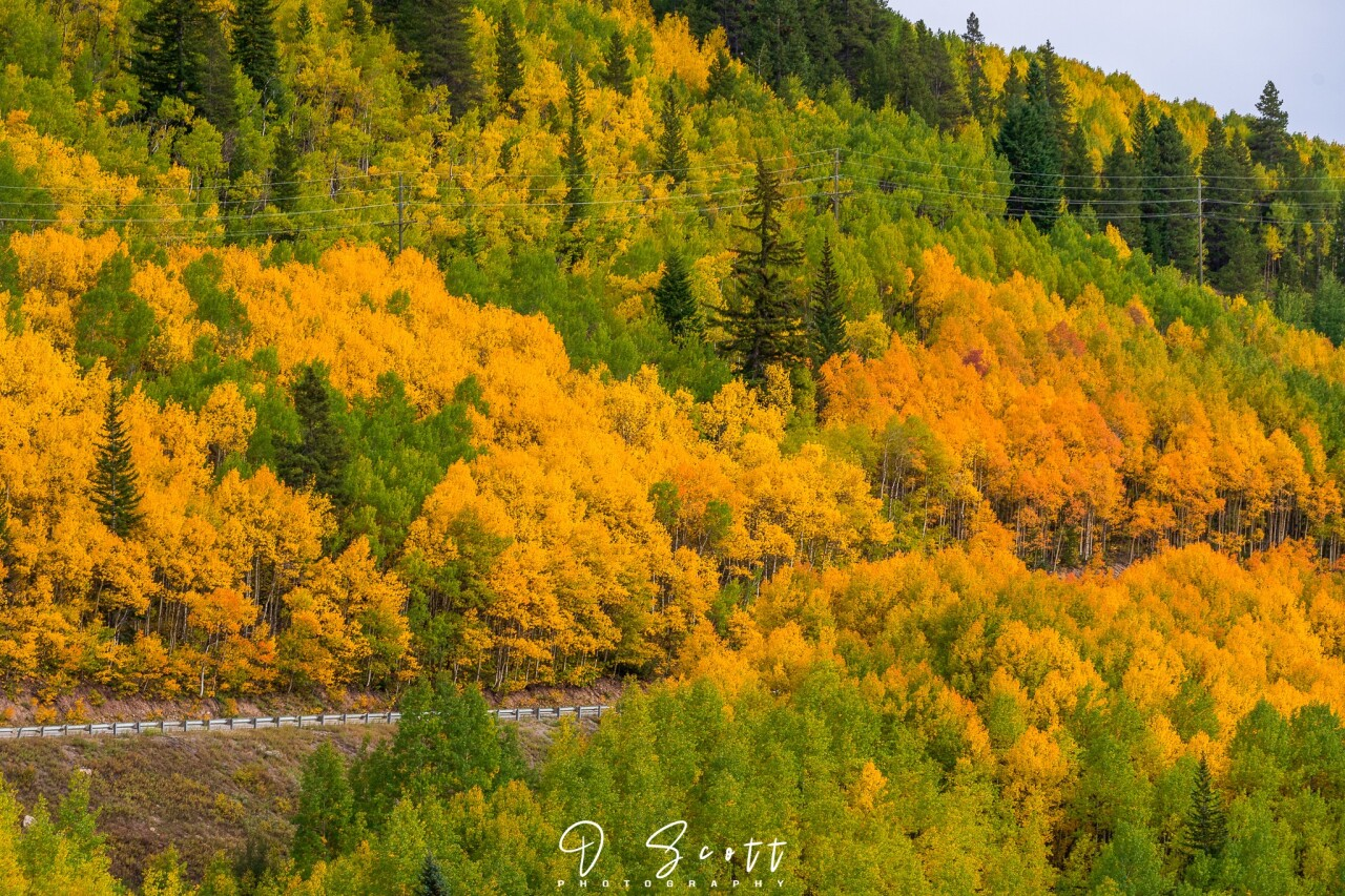 Daniel Forster_Highway 24 changing aspens