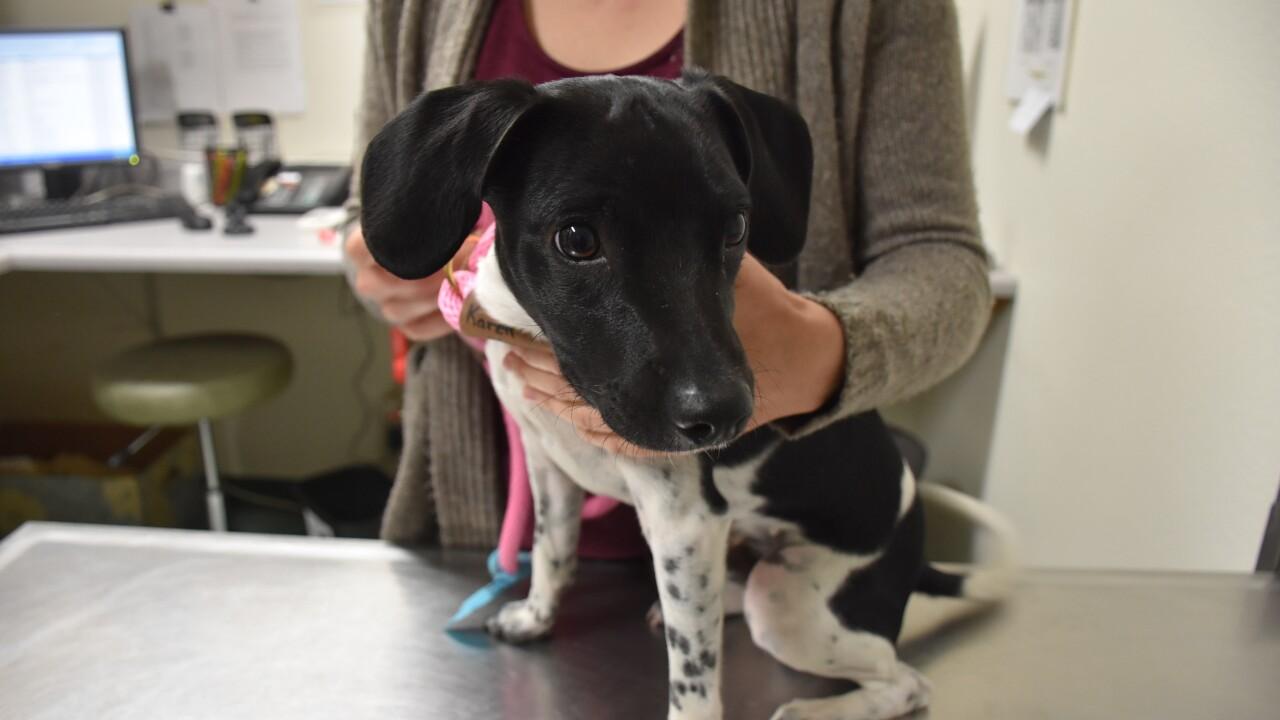 helen woodward puppy cowboy heart surgery_2.JPG