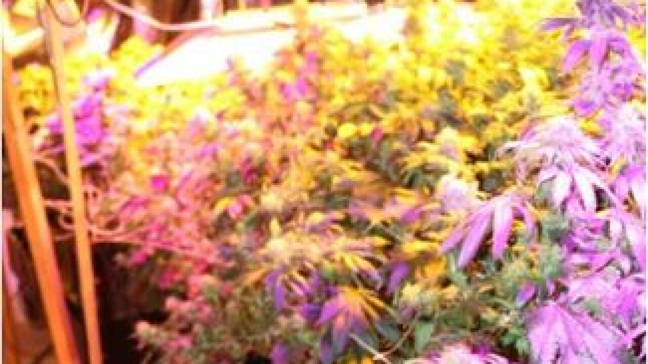 Boise man arrested after police find pot grow
