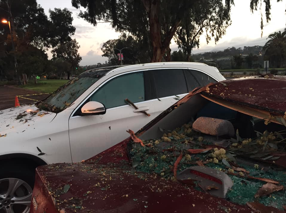 Cars crushed by falling tree