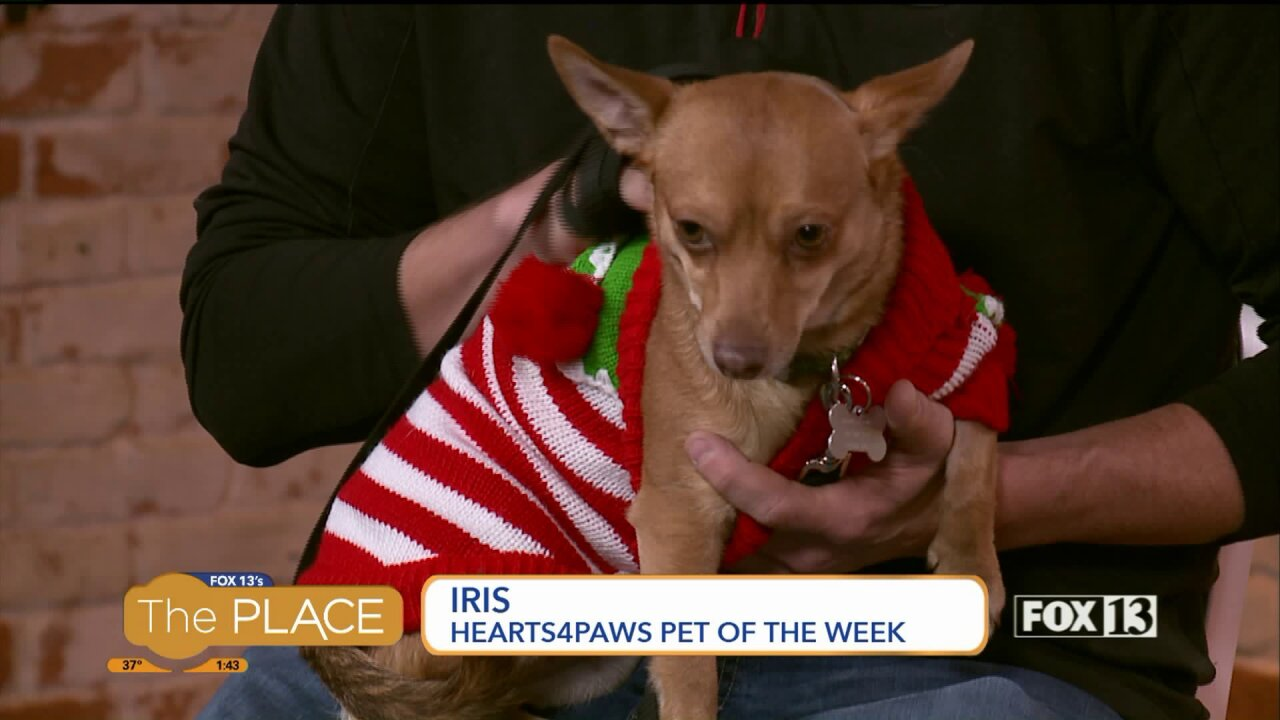 Hearts4Paws pet of the week:Iris