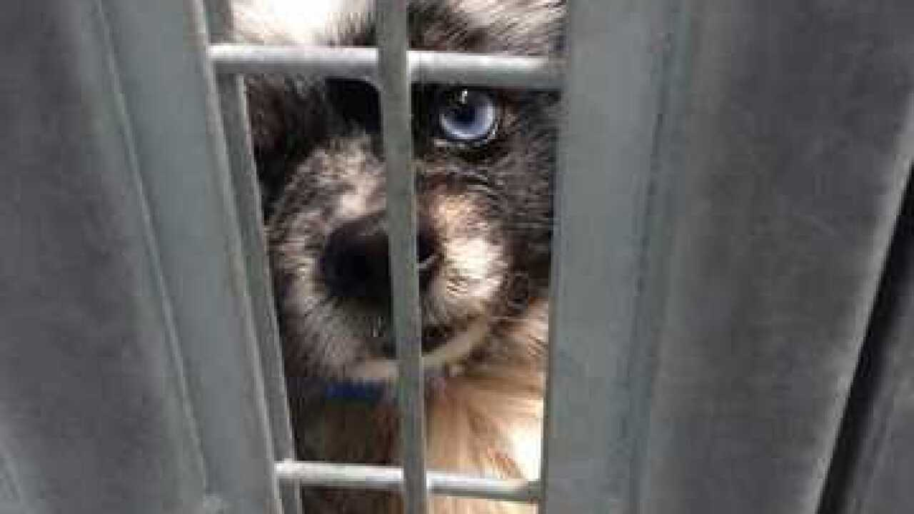 Puppy mill owner will plead guilty to cruelty