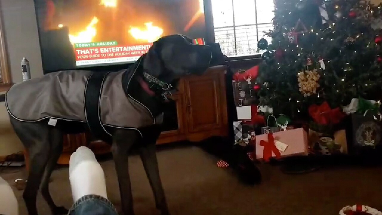 Dog Can't Contain His Excitement On Christmas