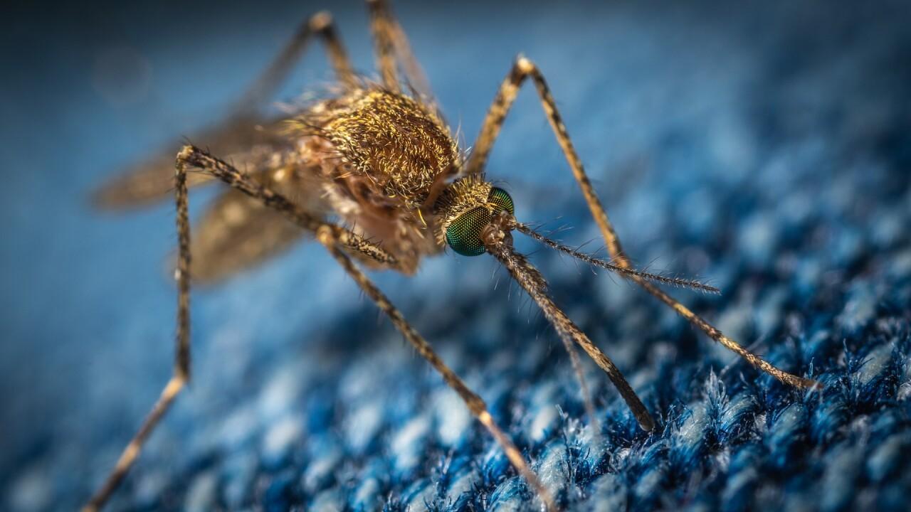 mosquito-ekamelev-3743404_1920.jpg