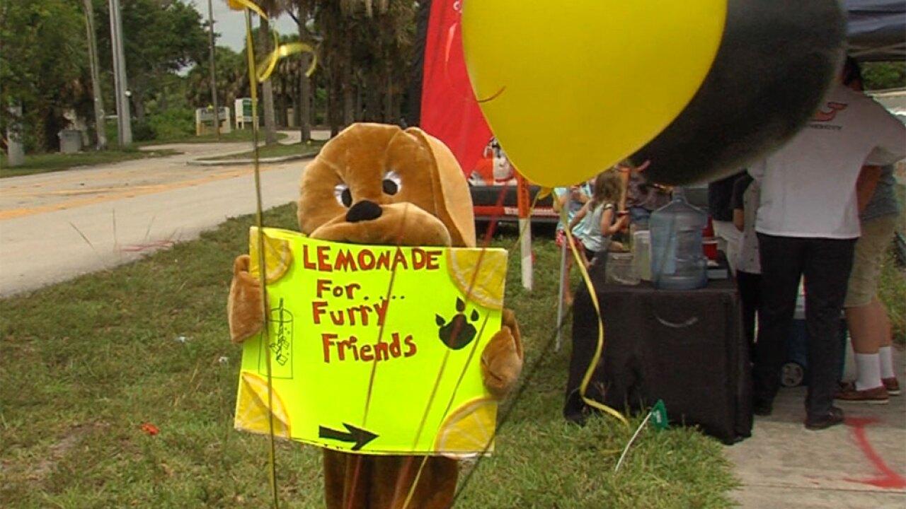 WPTV-furry-friends-lemonade-stand2.jpg