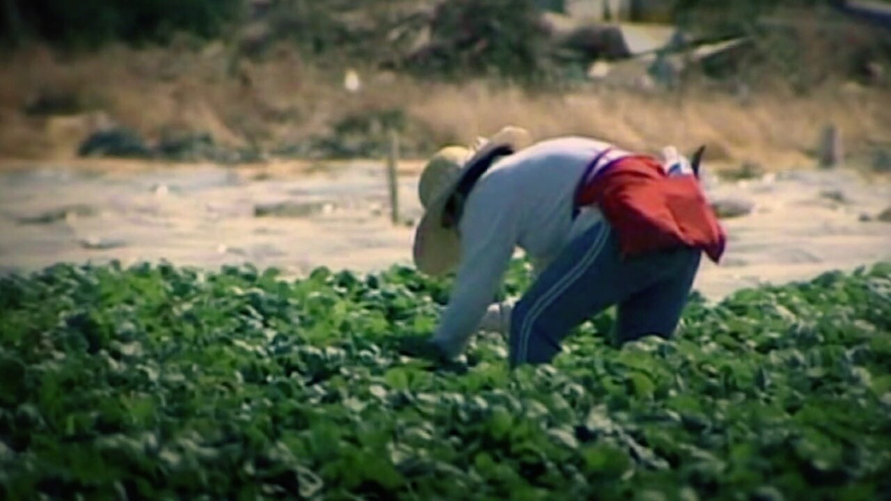 farmworker image .jpg
