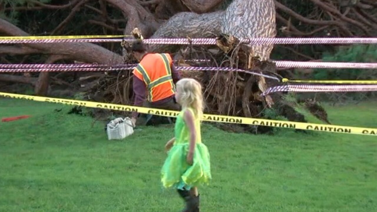 Trees scheduled for demolition at Spreckels Park