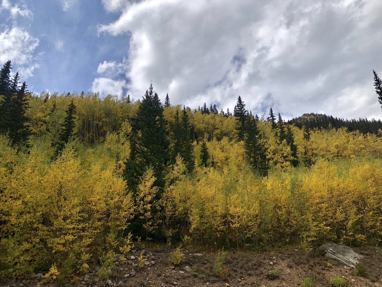 Guanella Pass Sept 21 2019_SButzer_changing aspens
