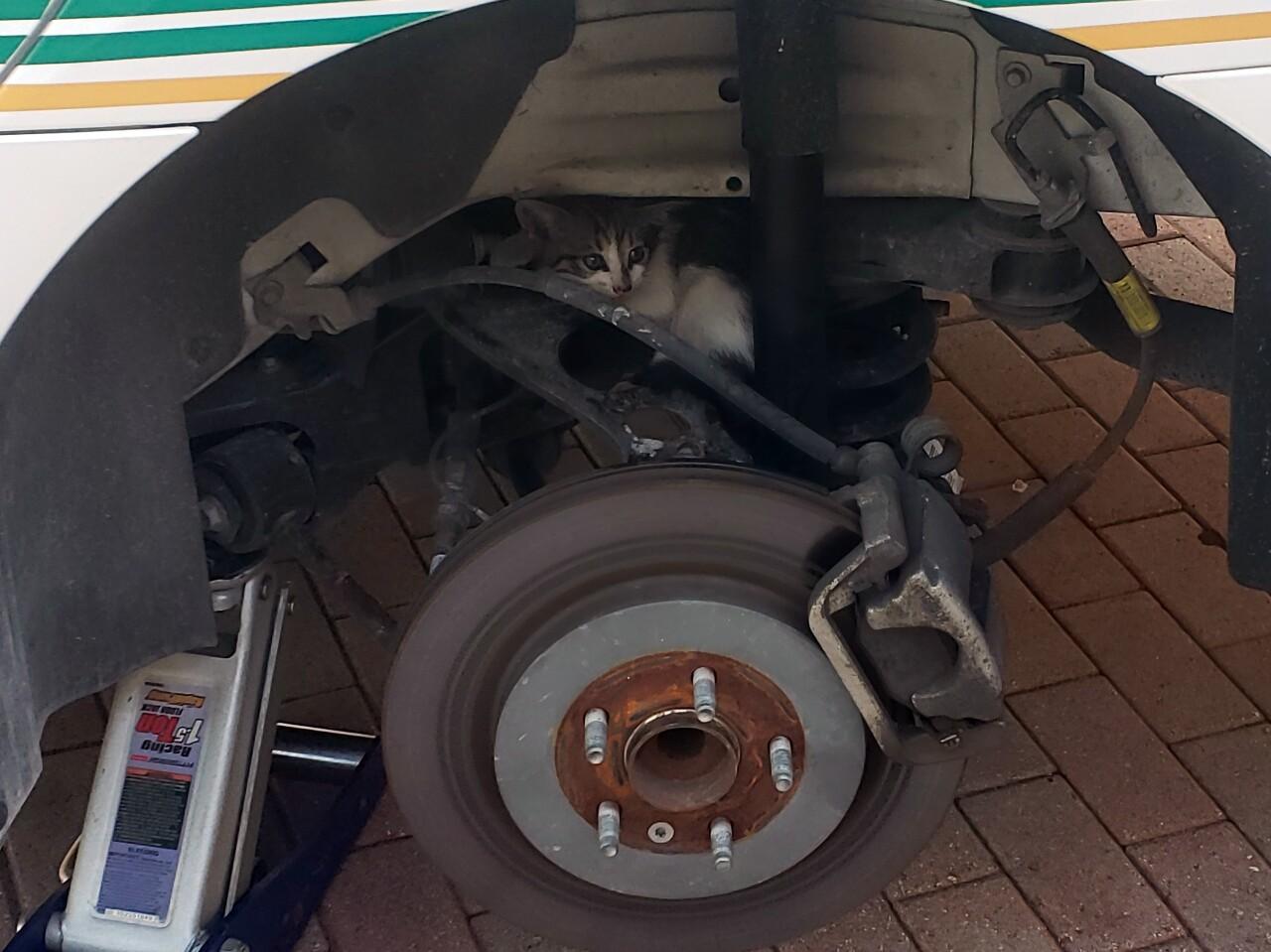 tire removed from rear of Florida Keys deputy's patrol car where kitten was hiding