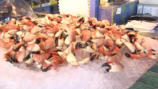 Will red tide affect stone crab season?