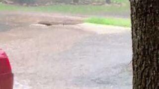 Flood pic 2.JPG