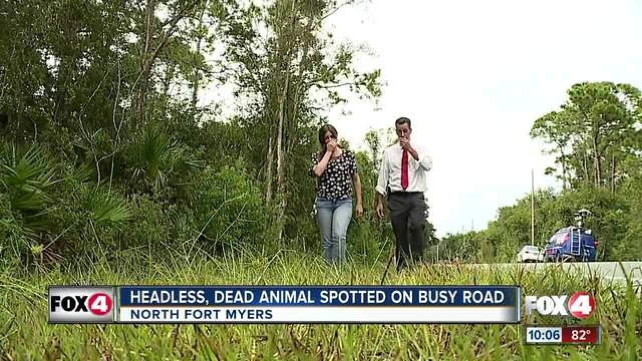 Headless goat, boar found in Florida neighborhood