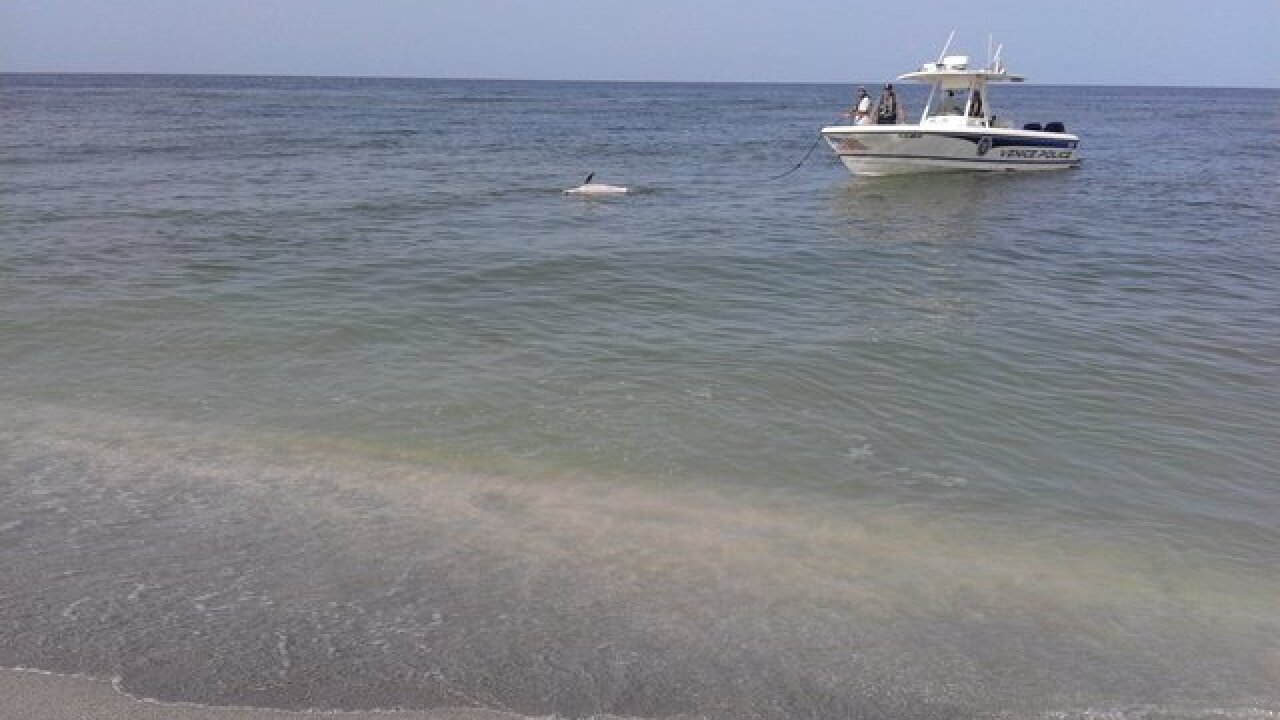 6 bottlenose dolphins found dead in 24 hours