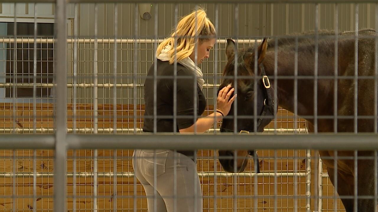Maryland program partners vets, guardsmen with racehorses to combat PTSD
