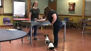 DOG BREWERY TRAINING