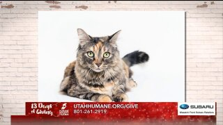 13 Days of Giving: Wasatch Front Subaru Retailers team up with Humane Society ofUtah