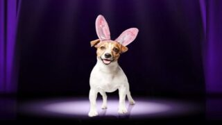 Enter Your Pet To Be The Next Cadbury Bunny