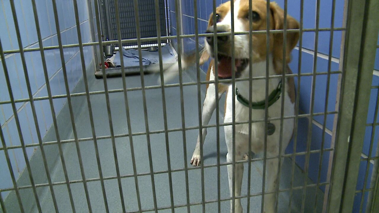 Richmond SPCA offering discounted pet adoption fee