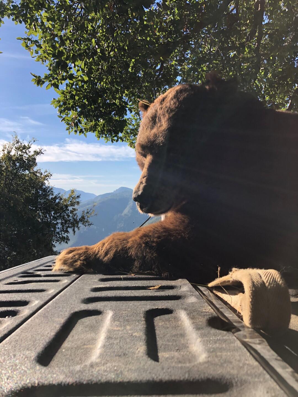 Solvang bear 2.JPEG