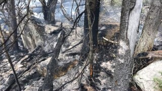 State Creek Fire near Whitehall jumps to 1,000 acres