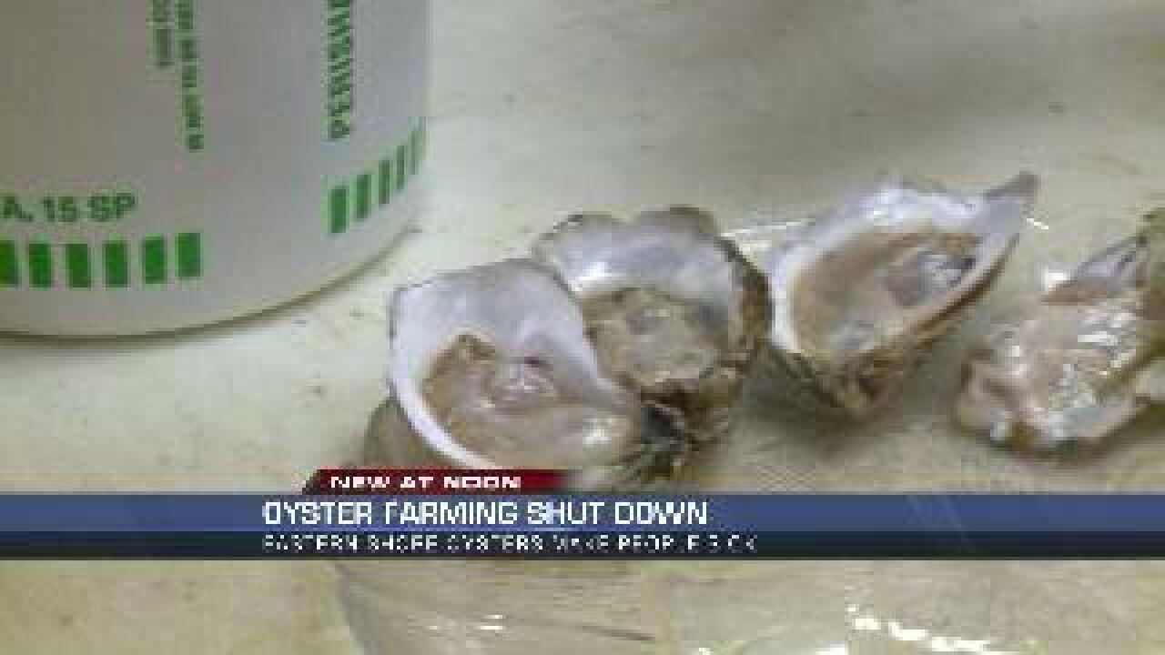 Some Eastern Shore oysters are unsafe to eat