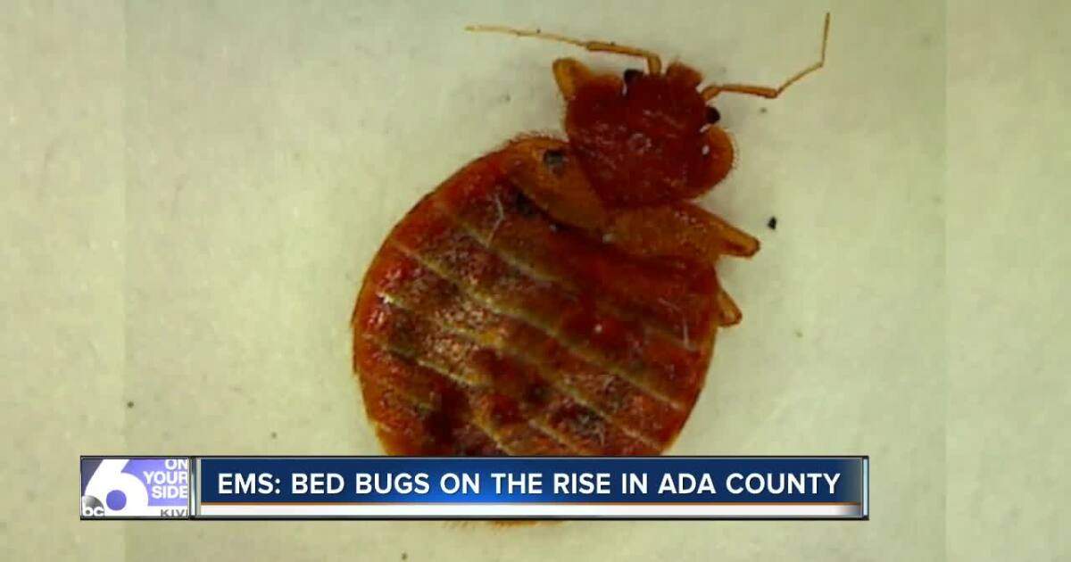 Bed bugs on the rise in Boise