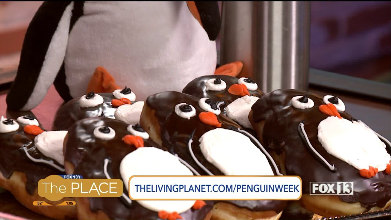 How the Living Planet Aquarium is celebrating Earth Day, PenguinDay