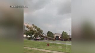 Caught on Cam: Tree falls on moving vehicle in Indiana