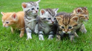 CATS-GENERIC-PEXELS.png