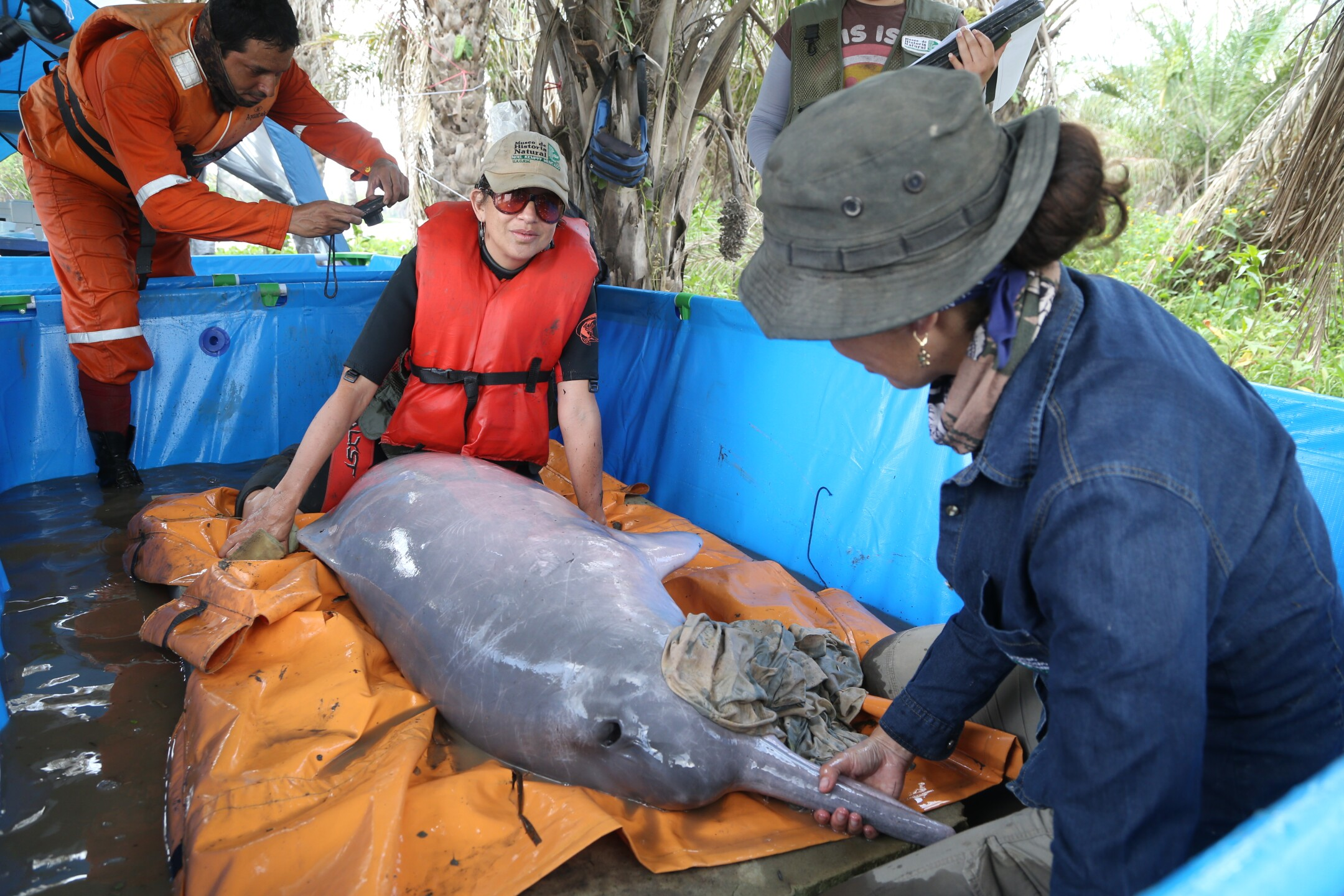 The team conducted an unprecedented level of medical research on the Bolivian river dolphins - The Maryland Zoo.JPG