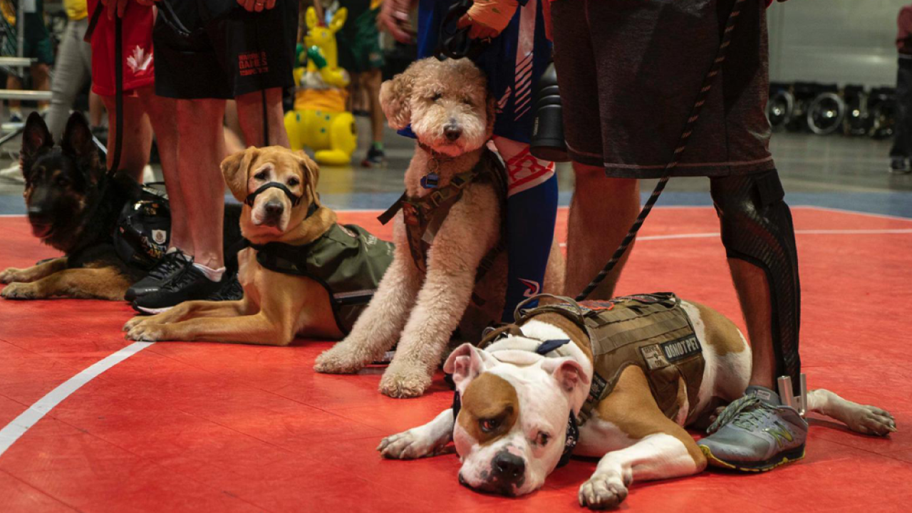 warrior-games-service-dogs.png
