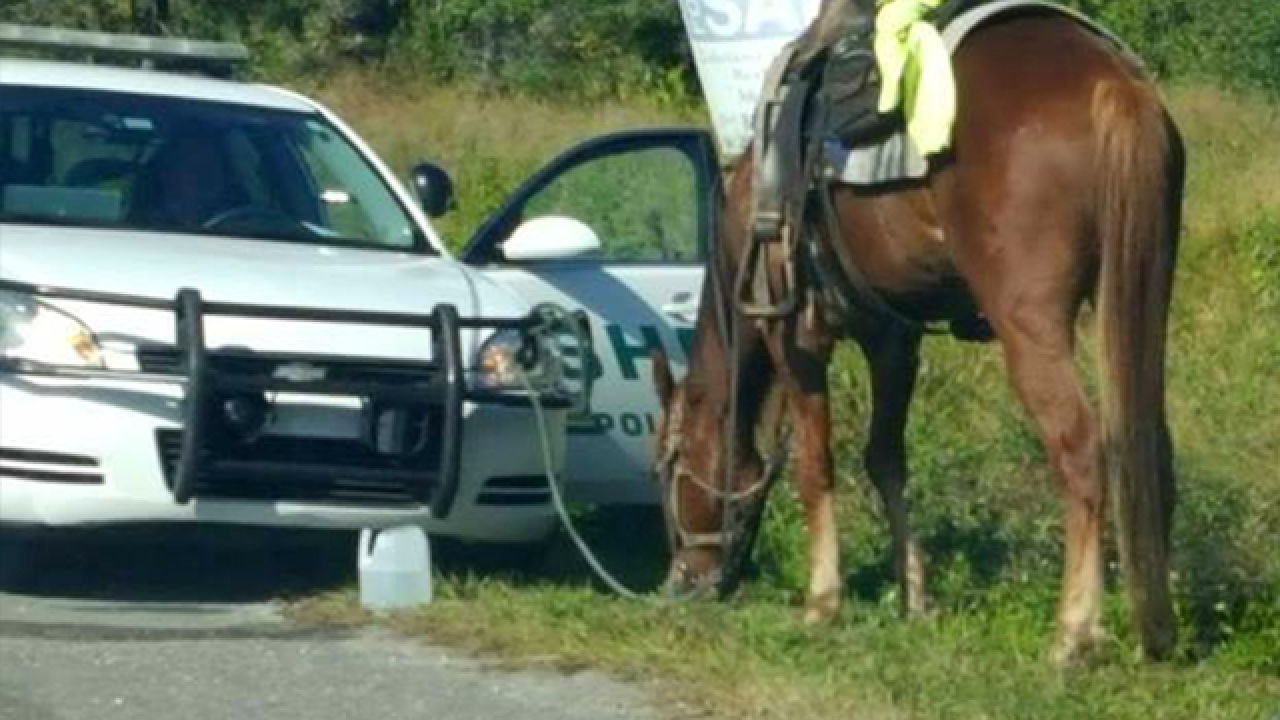 Deputies arrest woman for DUI on a horse