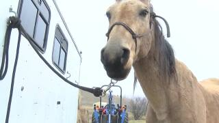 Lucky horse back home after Montana backcountry adventure