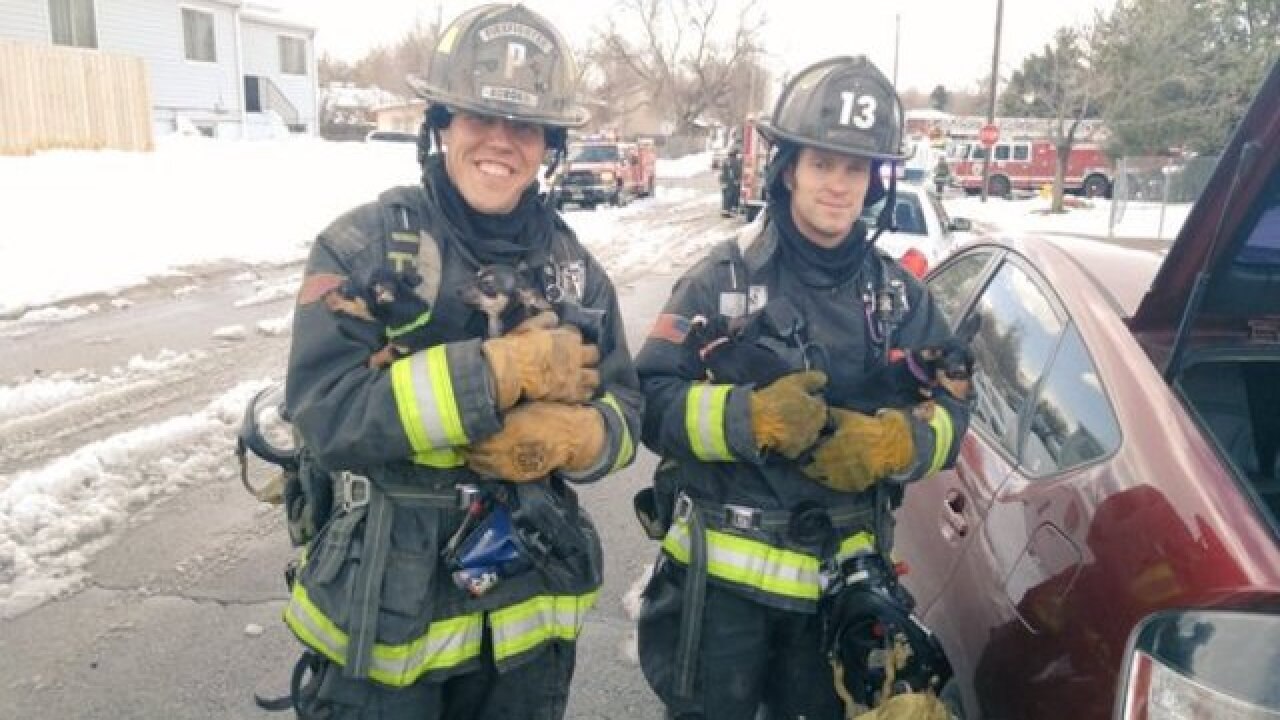 Aurora firefighters rescue dog and her 4 puppies