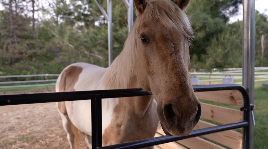 Pamela Allen Equine Therapy
