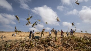 UN warns that Africa's plague of locusts could get much worse if no action taken