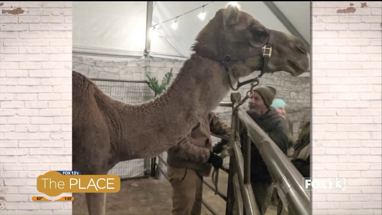 How a live nativity is helping localrefugees