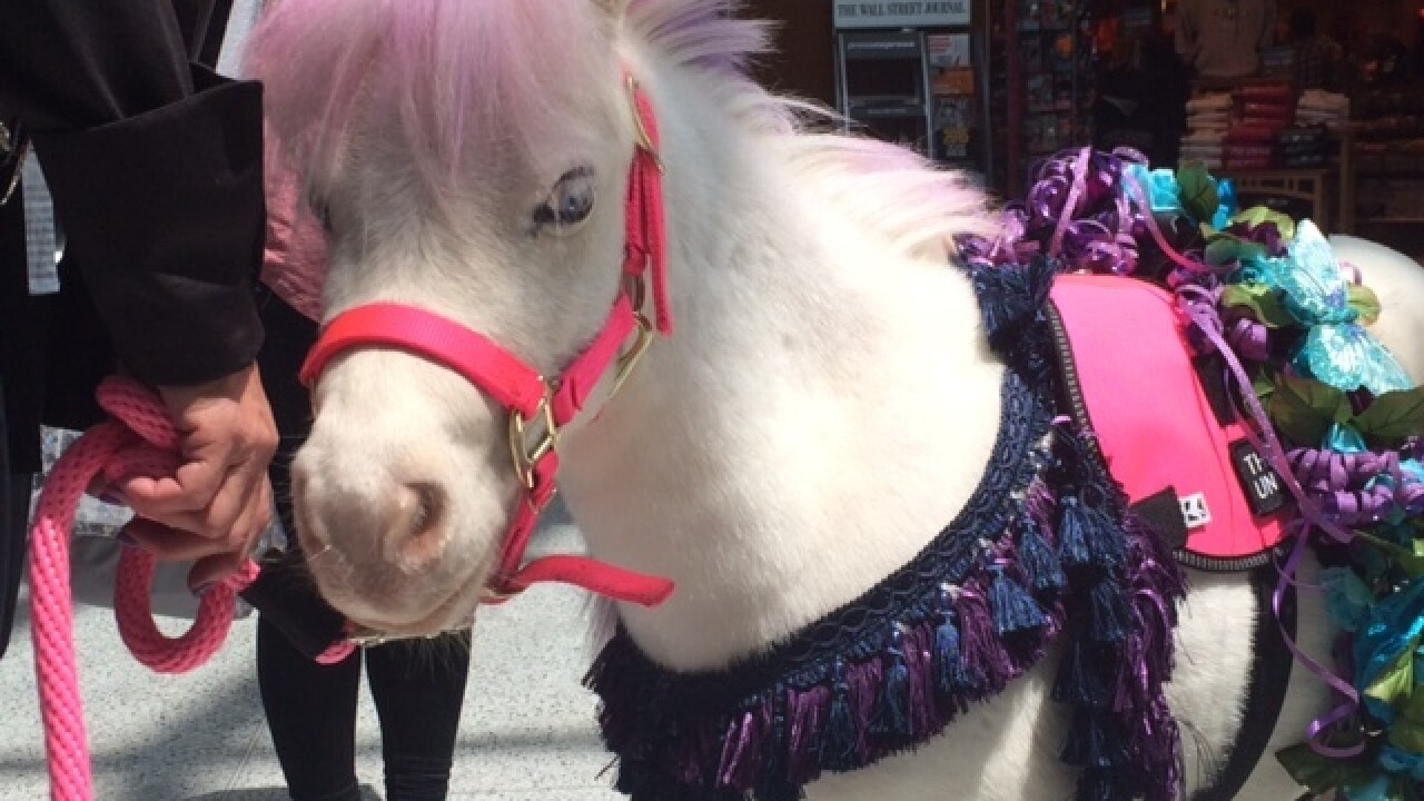 Flying make you nervous? See the therapy horse
