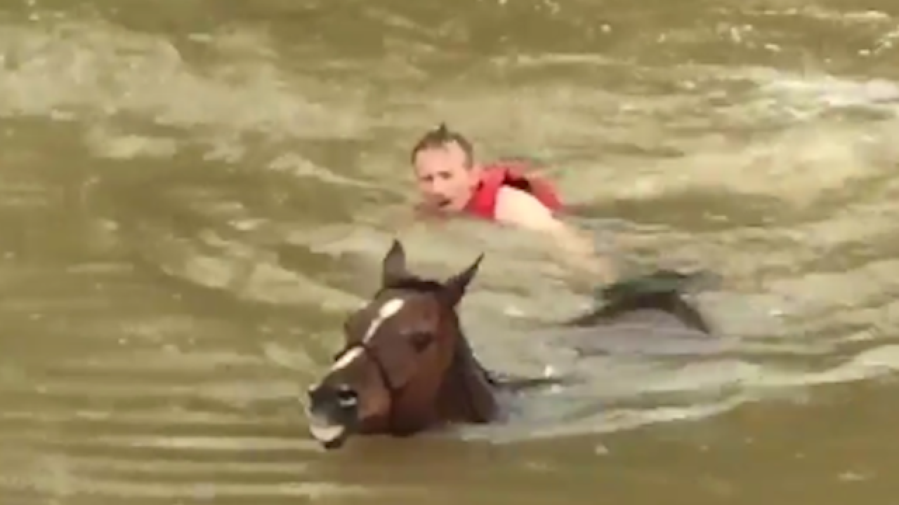 WATCH: Horses escaping Houston floods