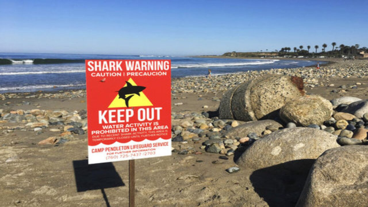 Beach closed after shark attacks woman off...