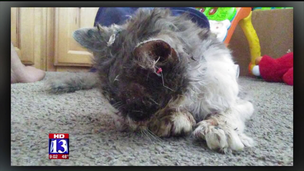 Sage the cat dies after extreme case of animal torture in Clearfield