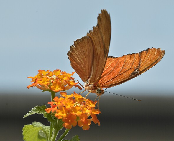 PHOTOS: Butterflies are back at the Indianapolis Zoo