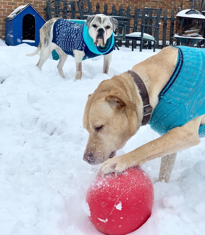 snow pups 3.jpg