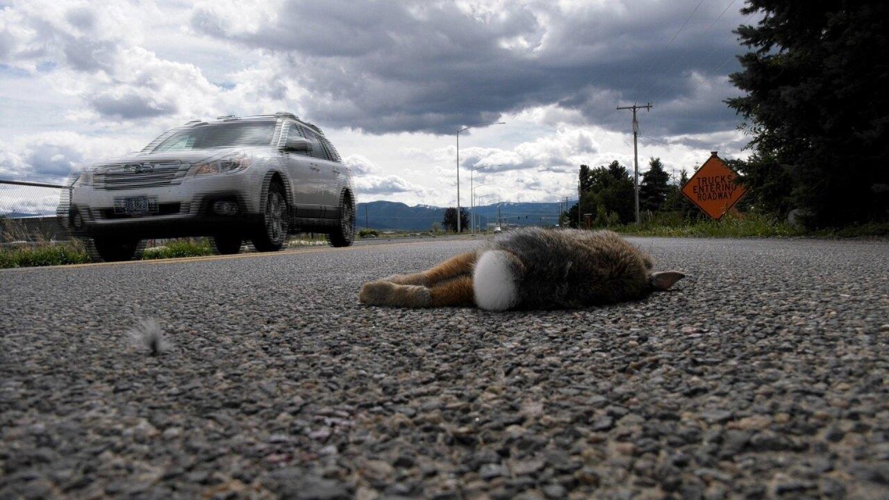 Roadkill Survey.jpg