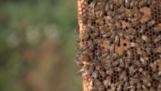 Scientists alarmed by loss of bee colonies call for help from artificial intelligence